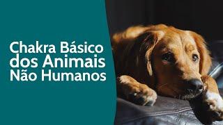 Chakra Básico dos animais não humanos