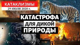 Катаклизмы за день 29 июля 2020 год | Катастрофа для дикой природы! Изменение климата!Climate Change