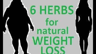 6 herbs for weight loss