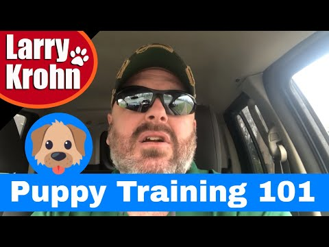 Puppy Potty Training - House Breaking - Crate Training - Puppy Socialization