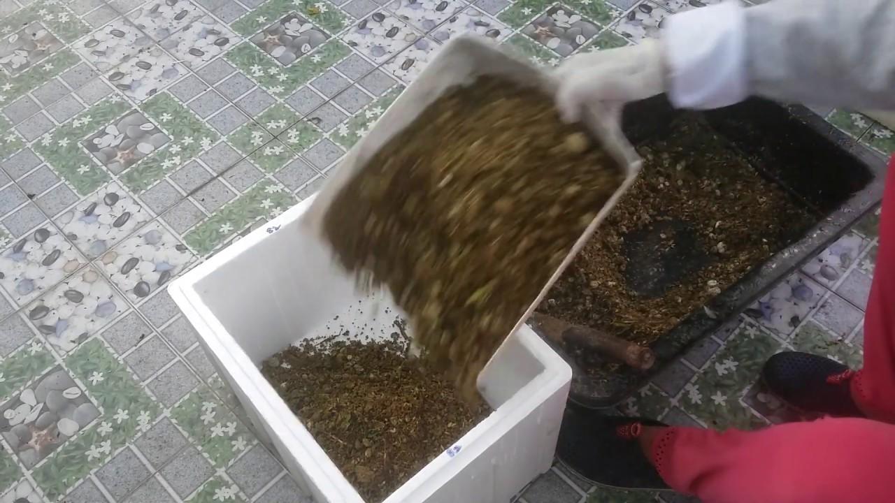 Cách ủ  Phân Gà khô cứng cũng phải hoai tơi ,xốp ,mùi nồng hăng 27/5/2019 | Khoa Hien 191