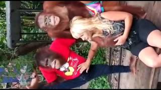 רונית דהרי אונס קבוצתי הקופים מתאילנד אין דברים כאלה צפיה חובה