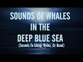 SOUNDS OF WHALES & HOWLING WINDS( Sleep, Relax, Or Read) 13
