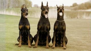 10 Best Police Dog Breeds In The World - MW-Magical World Channel