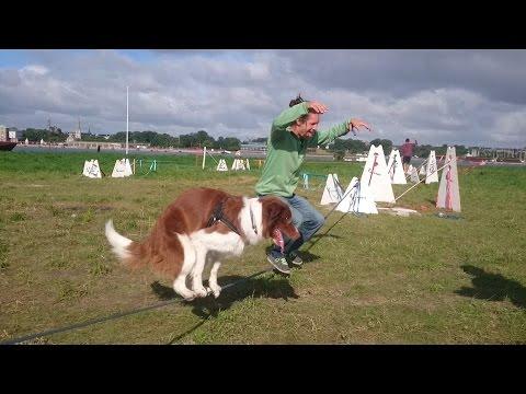 Acrobatic Dog - Tandem Slackline with a Human