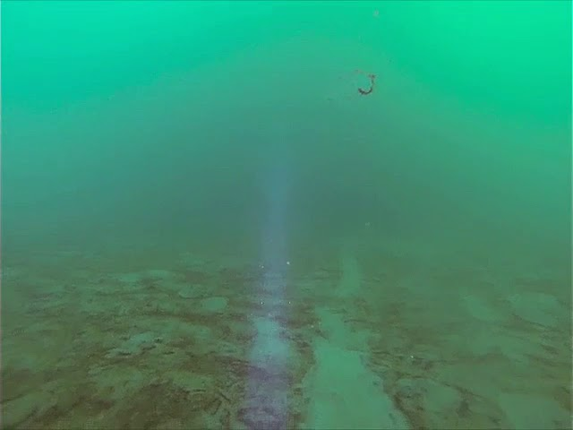 Under the Sea Ice, Ancient Jellyfish Swim By