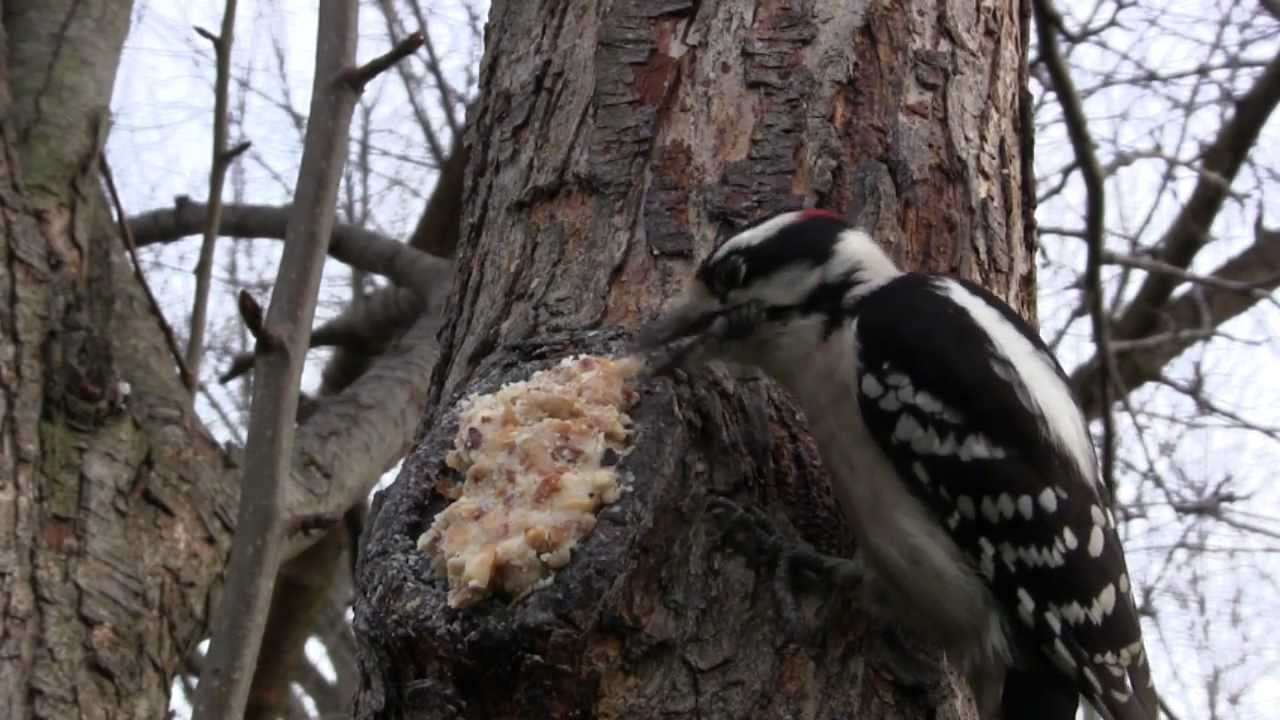 backyard birding make every tree a bird feeder youtube