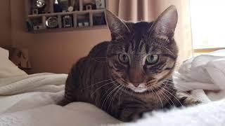 Playful Cats | Cute Cat Videos