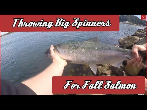 Bank Fishing Spinners For Fall Salmon! | Oregon Fall Salmon Fishing |