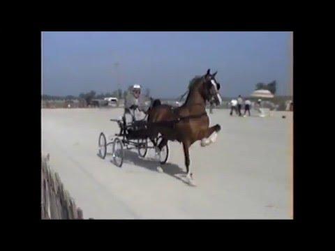 1992 OHA Hackney Horse & Harness Pony Championships