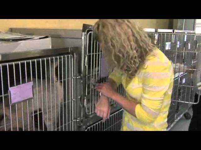 Animal Welfare League Of Charlotte County Youtube