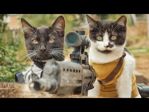 Cats Shoot Down Zombies Like You Know They Should