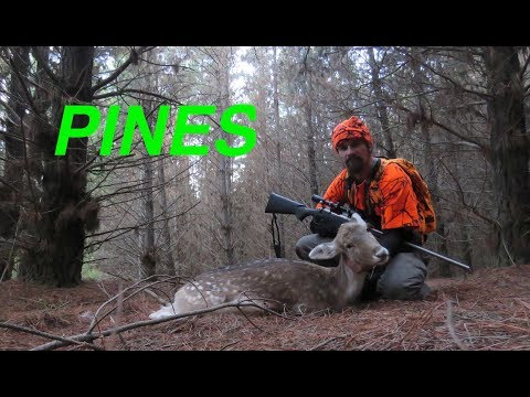 How To Hunt Pine Forests