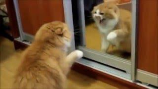 Кошки и зеркало от РУССКАЯ ПРИРОДА