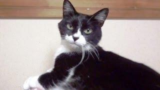 いつもなかよし(^^♪ごろにゃーんとなく猫ときれいな声でにゃーんと鳴く...
