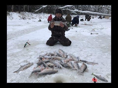 видео: Поклевка,есть кабанчик.за язем.зимняя рыбалка в ноябре на Ямале