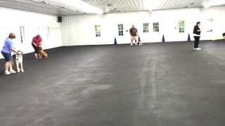 World Class Dog Kennels Group Obedience Class  Rockford Il.