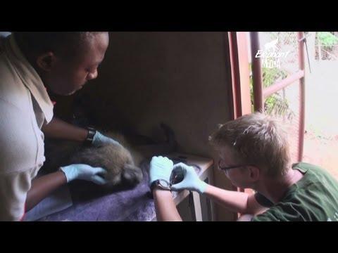 Lilongwe Wildlife Centre Documentary  2014