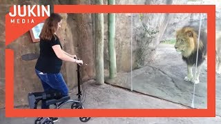 Lion Wants Girl's Scooter