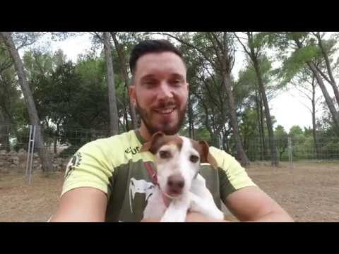 EDUCATION CANINE SALON DE PROVENCE / ALL DOG/ VLOG CHIEN