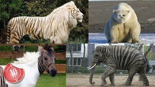 Top 10 Animals That Are A Mix of Two Species thumbnail