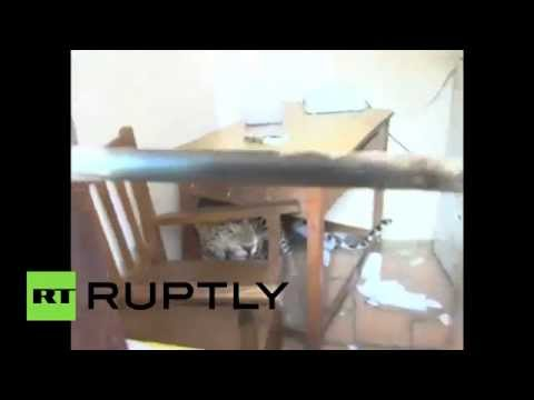 Meanwhile in India: School-crashing leopard takes over classroom