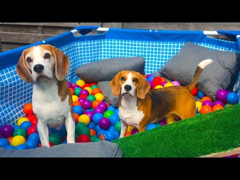 Pool to Ball Pit after Summer : Funny Dogs Louie and Marie