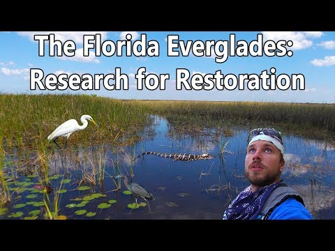 The Florida Everglades: Research for Restoration (Documentary)