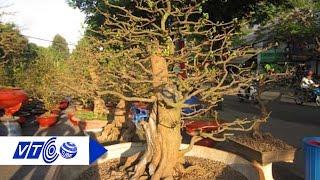 Phát sốt với cây cảnh độc lạ Tết Đinh Dậu | VTC
