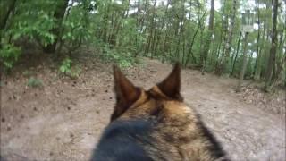 Dog attacks German Shepherd
