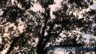 Marumari - Birch Beer Forest (Un-Official Music Video)