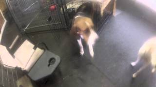 Frankie Training - Kennel And Here.