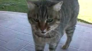 My cat farts!!! ( silly )