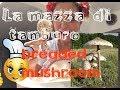 Ricetta Mazze di tamburo impanate - Roasted forest mushrooms recipe