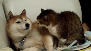 「ペロペロペロペロ」「やめろ!」顔をなめられて思わずパンチを返すも、本気で嫌がってないのがバレバレな犬と猫のじゃれ合い