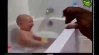 Cмешные животные и маленькие дети, а так же кошки балуются  Funny animals and small children, as wel