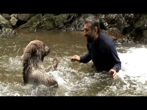 Carmen - Bear Gives Man a Hug and Kisses