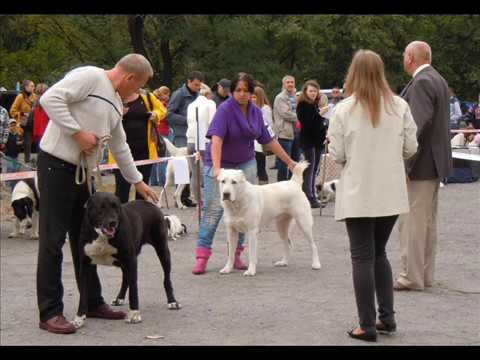 8 сентября 2013 выставка собак САС КСУ Северодонецк ФОТОЗАРИСОВКИ
