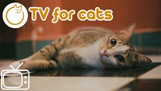 Calm Your Cat - Best TV For Cats 2018 - Cat Entertainment for Lonely Cats