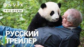 Панды 3D   Русский трейлер   Фильм [2018]