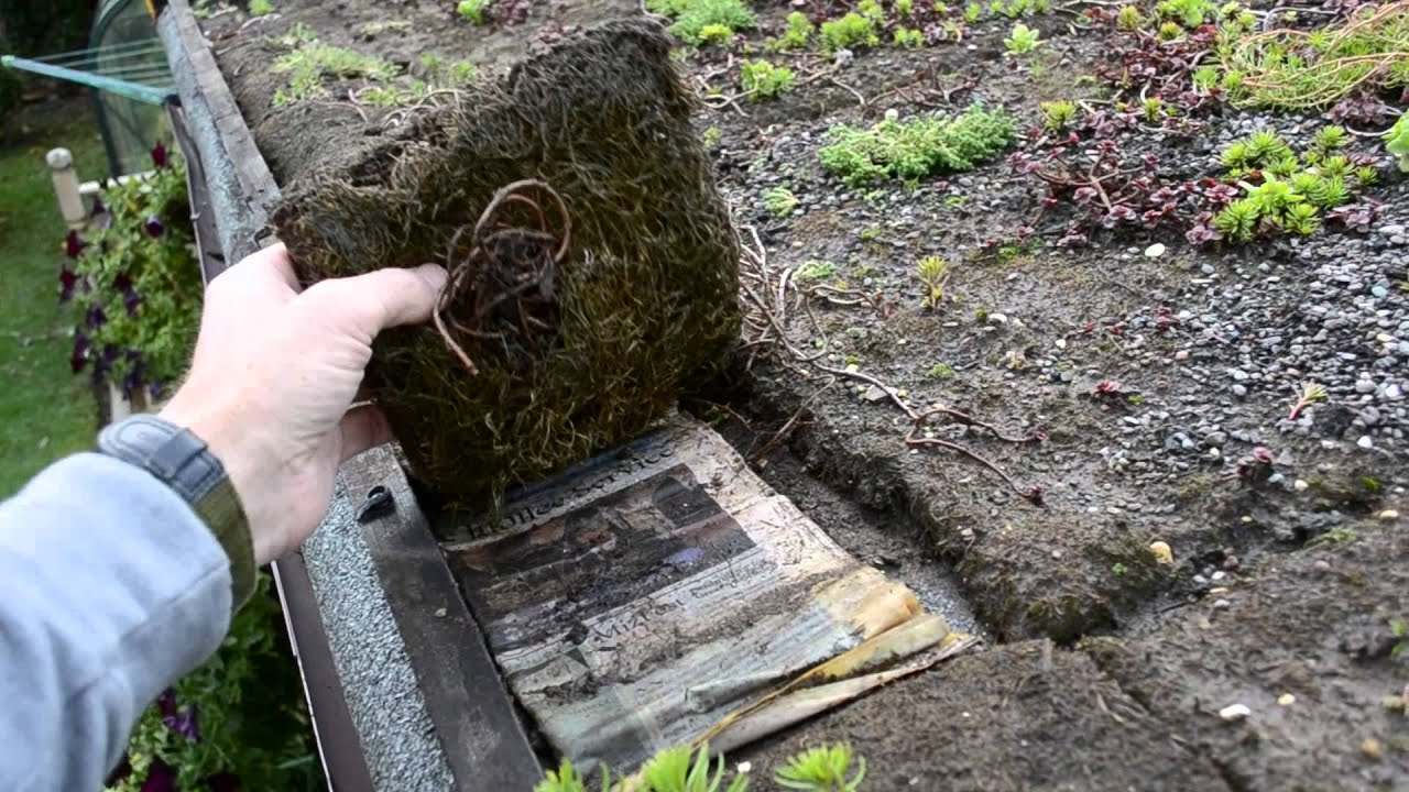 Superbe DIY Sedum Shed Roof   YouTube