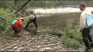 видео Реки Монголии   Монгольские реки