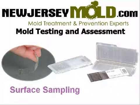 mold-inspection-nj-:-mold-testing-:732-504-3743-|-newjerseymold.com