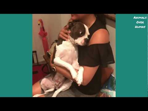 Best of Dog Reunion With Owners|Compilation Video
