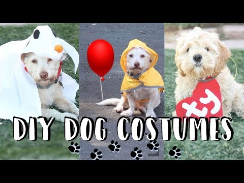 DIY Halloween Dog Costumes | Zero, IT Georgie, TY Beanie Babies 👻🎈🐶