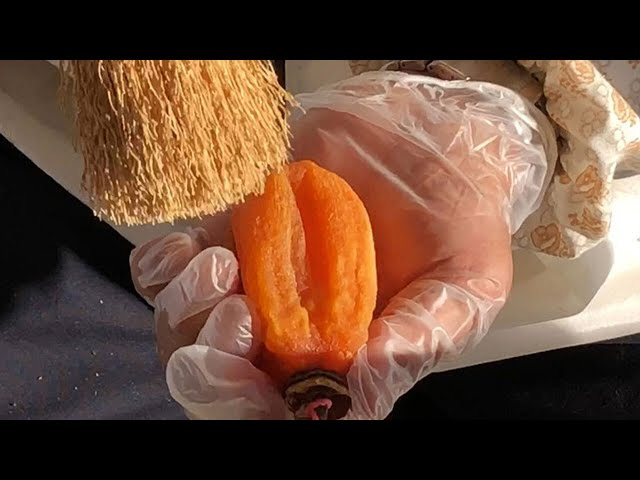 糖度60度の最高級干し柿 その生産ノウハウを映像に