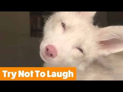 Funniest Cutest Pets | Funny Pet Videos