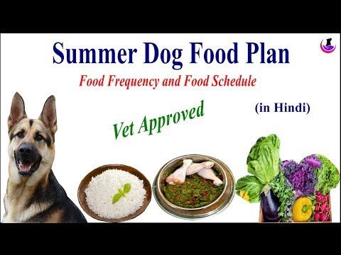 summer-dog-food-recipe-ii-dog-and-vet-ii-hindi