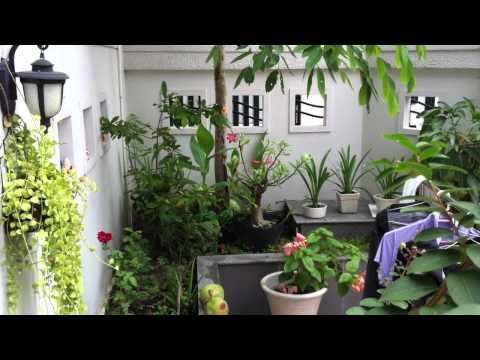 Cây nhà lá vườn