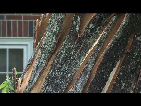 Severe storms leave damage behind